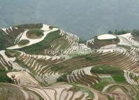 Longji Terraced Rice Fields in Water June