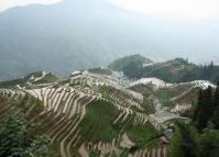 Marvelous Rice Terrace at Longsheng