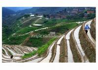 Longji Terrace in Spring