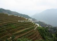 Longji Terraced Rice Fields