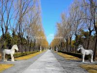 The Horse Stautes in Sacred Way Beijing Ming Tombs