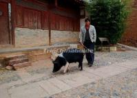 People's Life at Shaxi Ancient Town