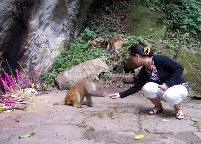 The wild monkeys in baoxiang temple in Shibaoshan Mountain