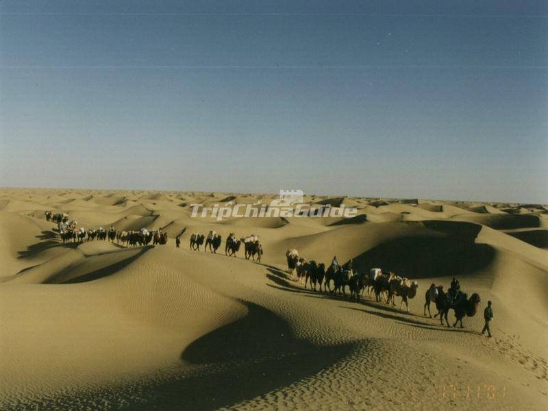 Camel Caravan on the Silk Road
