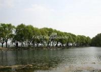 The West Causeway in Summer Palace