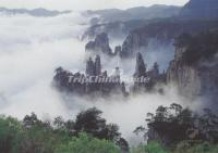 Mist Over Tianzi Mountains, China