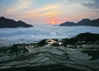 Sunset and Mist Over Tiger Mouth Rice Terraces