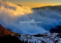 Beautiful Mist Over Tiger Mouth Rice Terraces