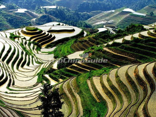 Zhuang Rice Terraces